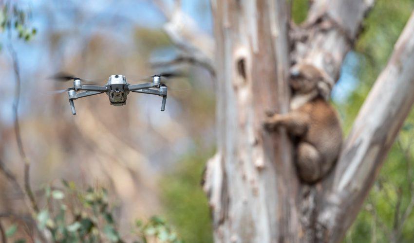 drony w australii
